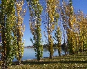 Autumn at Yerrabi Pond, Gungahlin